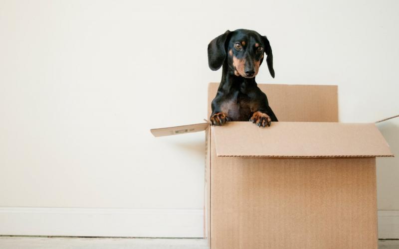 Sve što treba da znate o selidbi sa psom