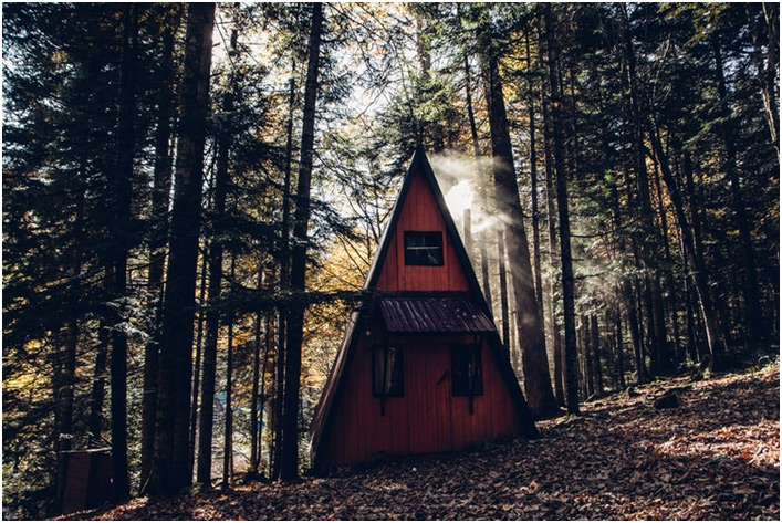 Brvna u šumi
